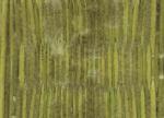 従来の「イ草おもて」の画像